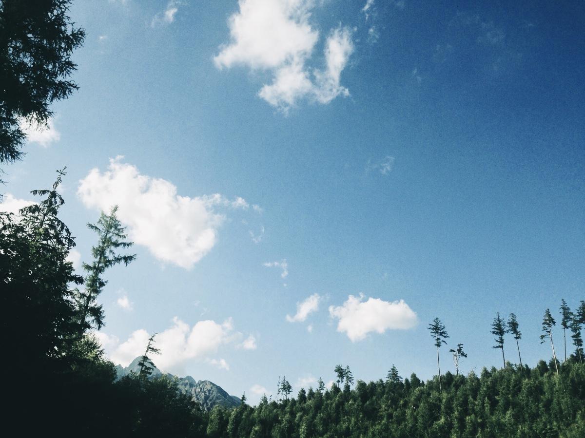 thunder gods | trees