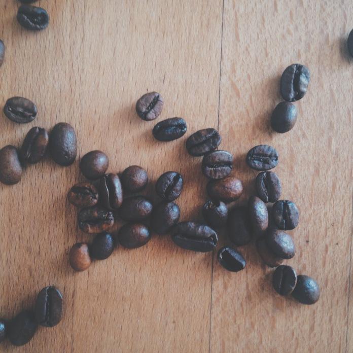 herbier 4 | coffea arabica | clio em