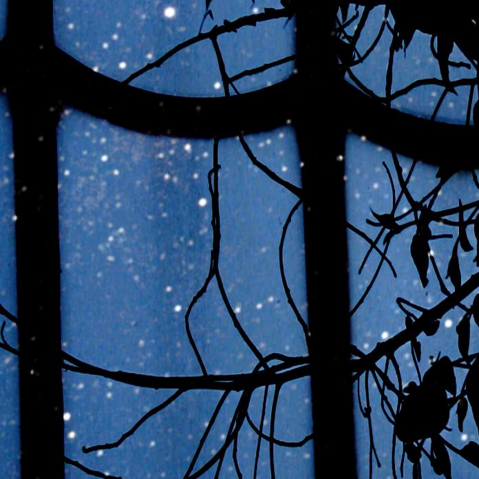 Conservatory, image© Hali Rey